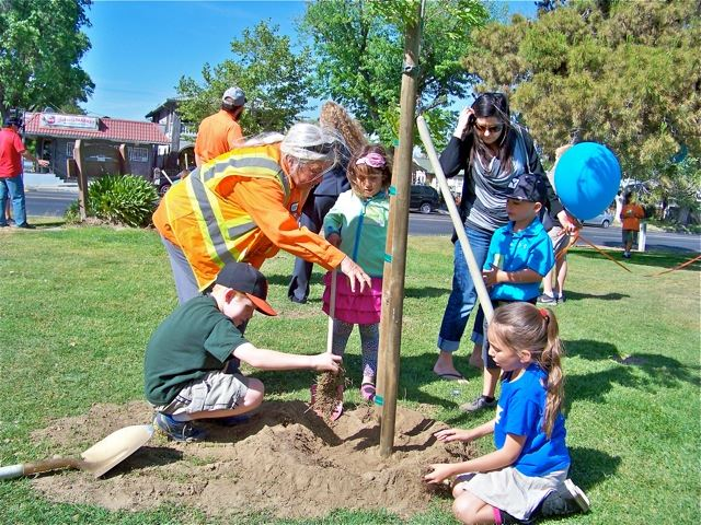 City staff assisting community members with planting tree